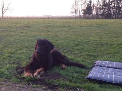 Dichio am Tag der Ankunft in seinem neuen Heim in Holland